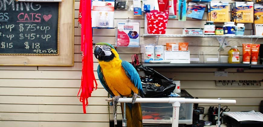 Pet Store with a Parrot resting on a perched