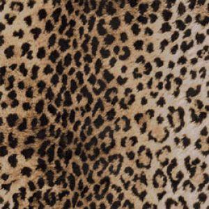 Animal Print Gift Wrap, Leopard Print Linework